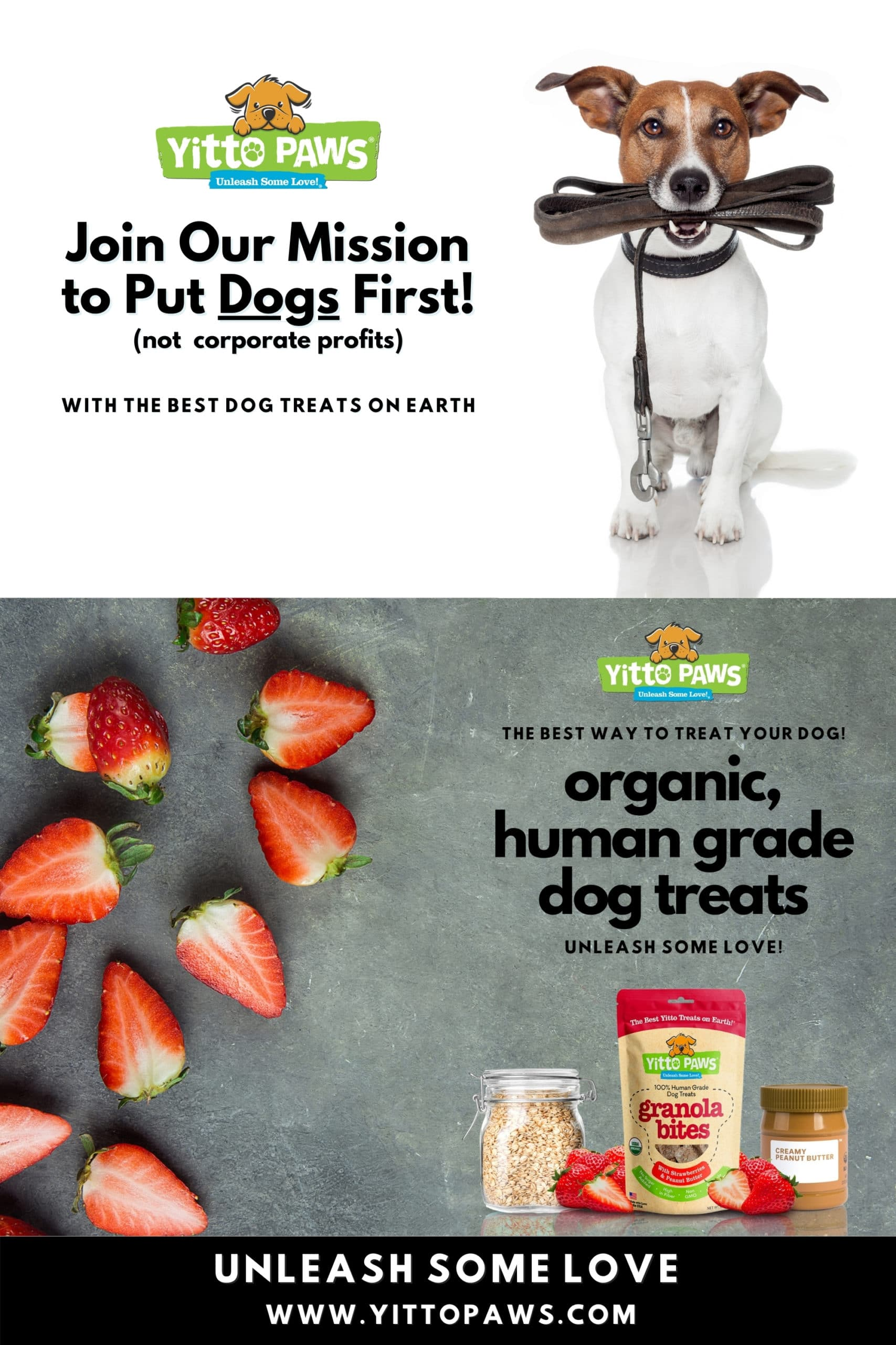 Join Our Mission at Yitto Paws to Put Dogs First!